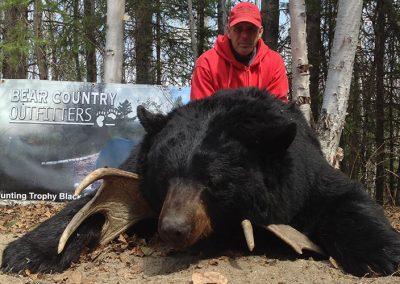bear-country-bear